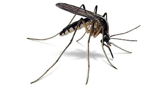 Dallas County Health and Human Services laboratory has confirmed several mosquito traps in Dallas County have tested positive for West ...