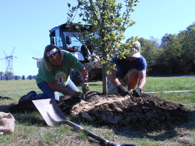 "Volunteers plant trees at the Abraham Lincoln National Cemetery for the ""Saluting Branches"" volunteer day."