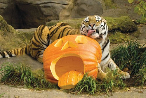 "Trick-or-treaters can fill their bags with goodies and learn about wildlife Saturday, Oct. 31, during ""Howloween"" at the Oregon Zoo. ..."