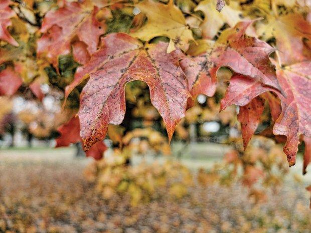 Fall foliage in North Side