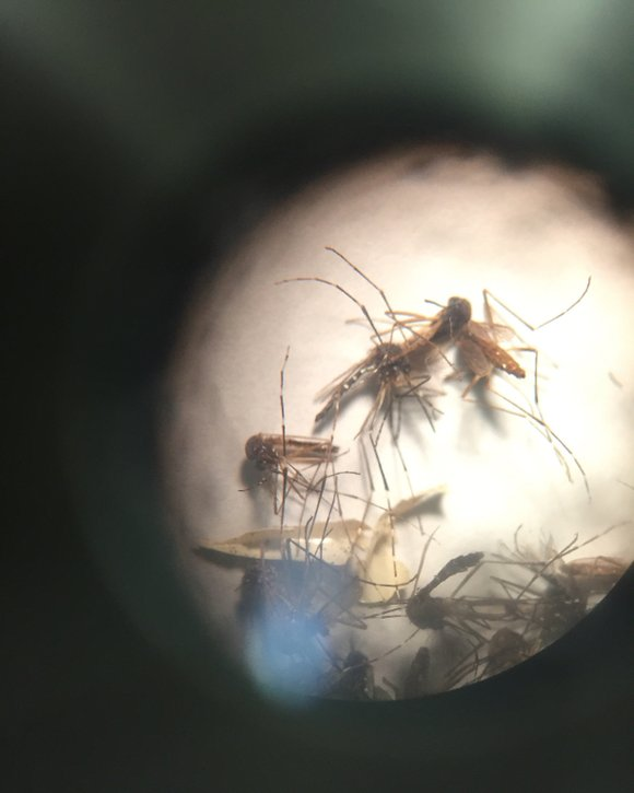 A relatively new mosquito-borne virus is prompting worldwide concern because of an alarming connection to a neurological birth disorder and ...