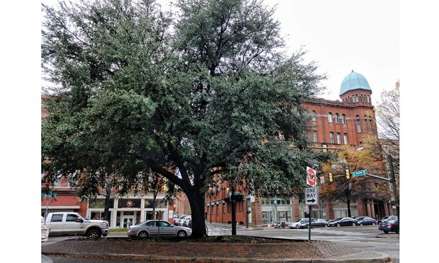 The live oak tree that fills the site of the planned Maggie L. Walker statue and plaza has been the center of debate and controversy. Location: Adams and broad streets in Downtown.