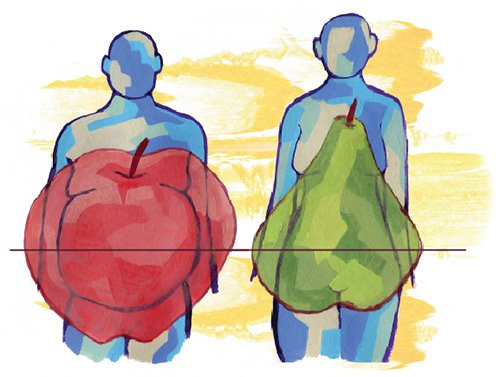 Apple-shaped people, or those who carry more weight around the waist, are thought to have a higher risk of heart disease and diabetes than pear-shaped people who carry more weight around the hips.