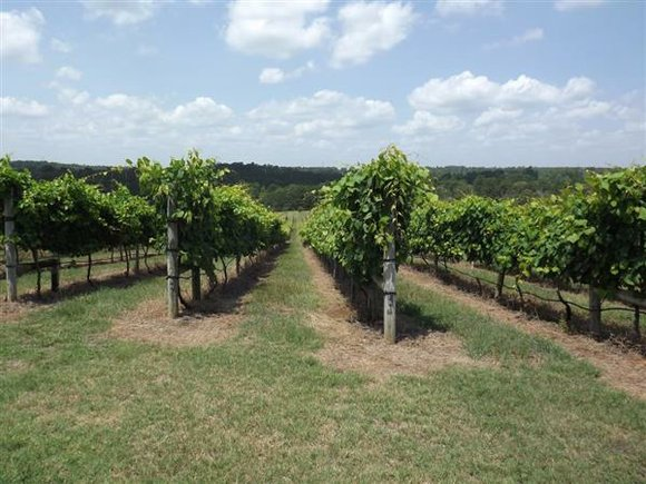 Altus Koegelenberg, owner and operator of Enoch's Stomp Vineyard and Winery in Harleton, planted his first vine in 2005 when ...