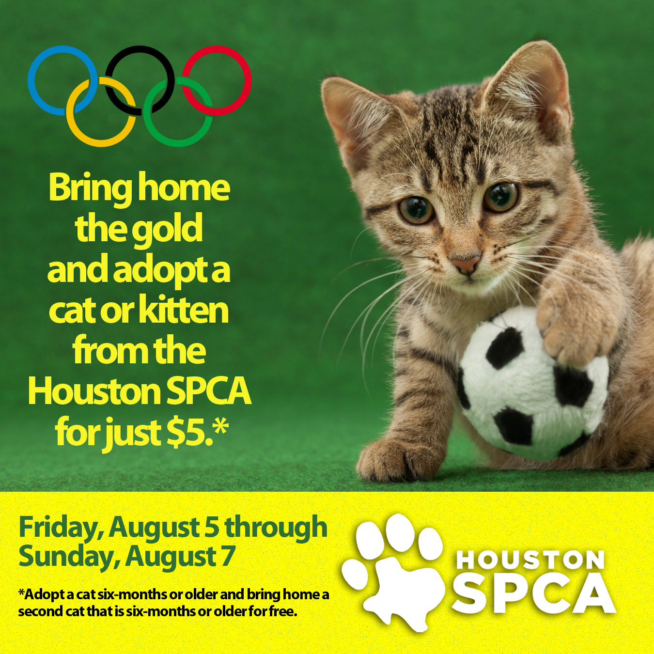 Team Houston SPCA Celebrates Feline Summer Games