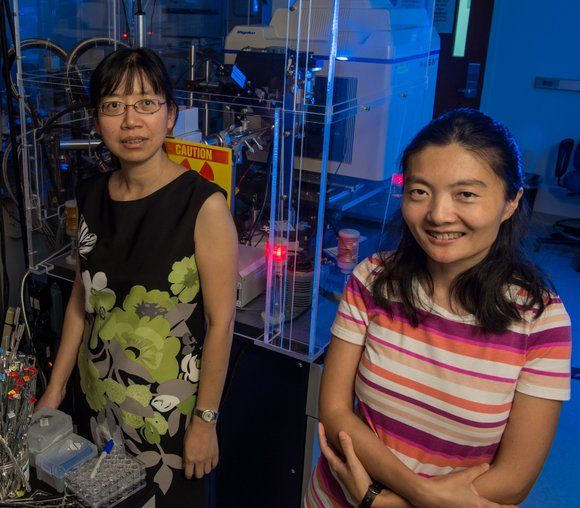 Rice University structural biologist Yizhi Jane Tao and geneticist Weiwei Zhong have won a prestigious National Institutes of Health R01 ...