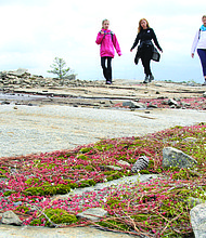 Hikers and walkers will see displays of color in surprising places on Arabia Mountain in Stonecrest this spring as the granite outcrop puts on a show.