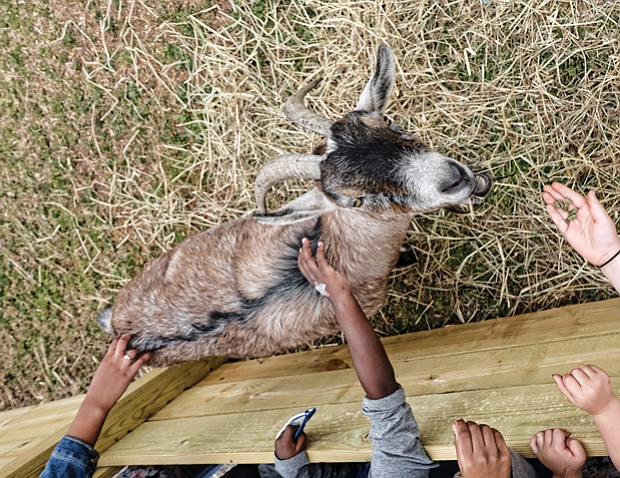 Family fun at Baymont Farm // Children feed and pet a goat at the newly renovated Maymont Farm. Thousands of families turned out Sunday for the grand reopening of the farm, which was closed for the last 10 months for a $3 million renovation.