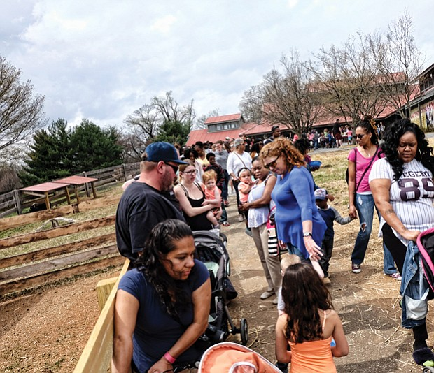New farm features include a renovated barn, allowing visitors easier access to feed and pet animals, and a hand-washing station for use afterward. Maymont also has two new retired racehorses in residence and five black faced sheep.
