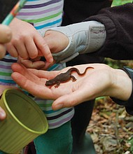 Participants discover a newt while counting critters in their natural habitat during a day of exploration sponsored by the Vancouver Water Resources Education Center.