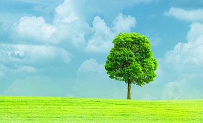 To become a member of the Foundation and receive the free trees, send a $10 contribution to Ten Free Shade Trees, Arbor Day Foundation, 100 Arbor Avenue, Nebraska City, NE 68410, by April 30, 2017, or visit arborday.org/april.