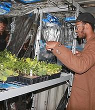 Hasani Douglas checking the growth of plants