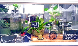 A window displays shows the steps to producing a small garden within a confined space.