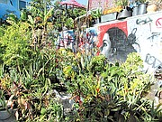 Graffiti art meets horticultural artistry in Finley's breathtaking garden.