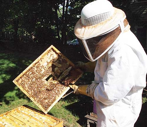 Since catching the urban beekeeping bug seven years ago, Leonard Lee's been spreading the word, and he's on a mission ...
