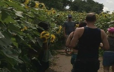 Sunflowers for Wishes is an annual event at a local farm to raise money for the Make-A-Wish Foundation.