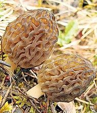 Don't be intimidated by morels — they might look like gnomes from a magical land, but they're just delicious mushrooms.