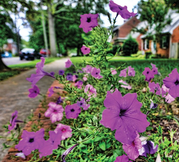 Pretty petunias in the West End