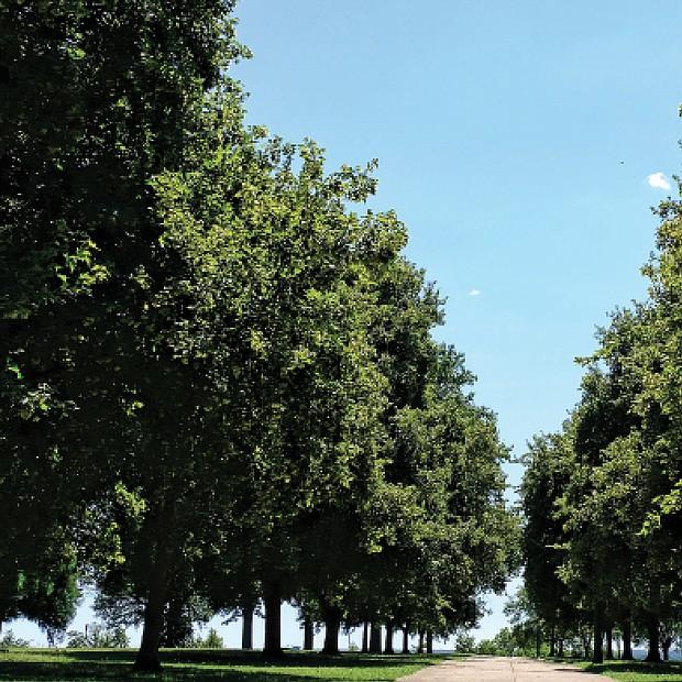 Tree-lined path at Chimborazo Park