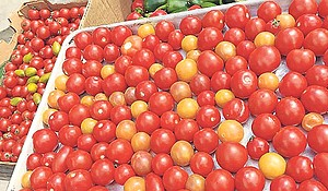 It is indeed possible to have too many tomatoes, depending on the company you keep.