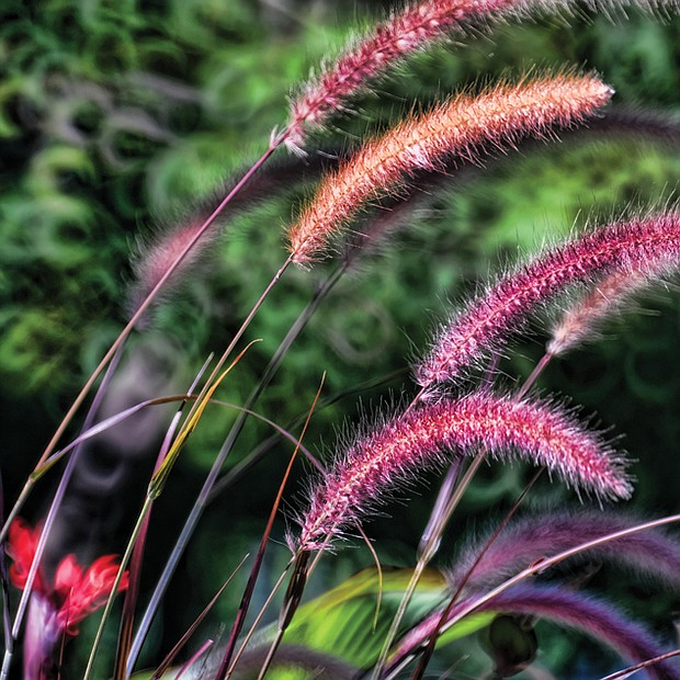 Ornamental grass in the West End