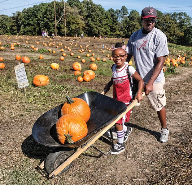 Pumpkin picking //