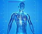 Human body/X-ray/health