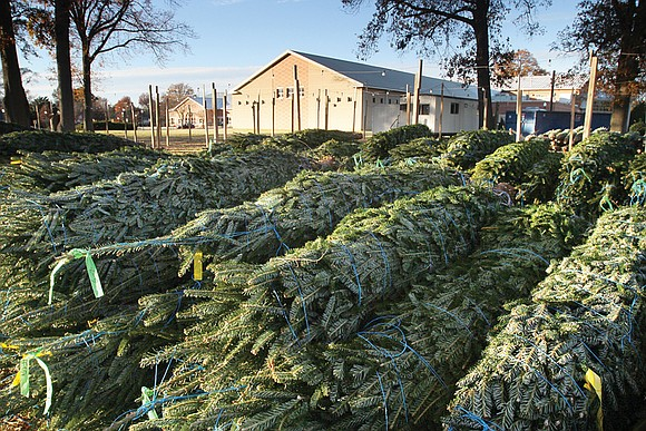 Need to dispose of your live Christmas tree? Good news. City Hall has three ways to get it done.