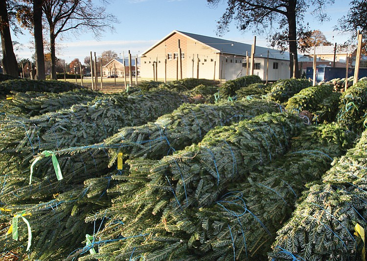 Tampa Bay Counties Offer Christmas Tree Recycling Programs