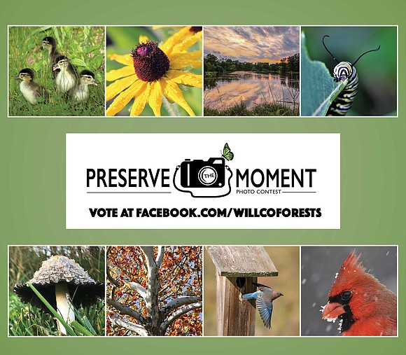 Help choose the top three 2017 Preserve the Moment photo contest pictures by voting now on the Forest Preserve District ...