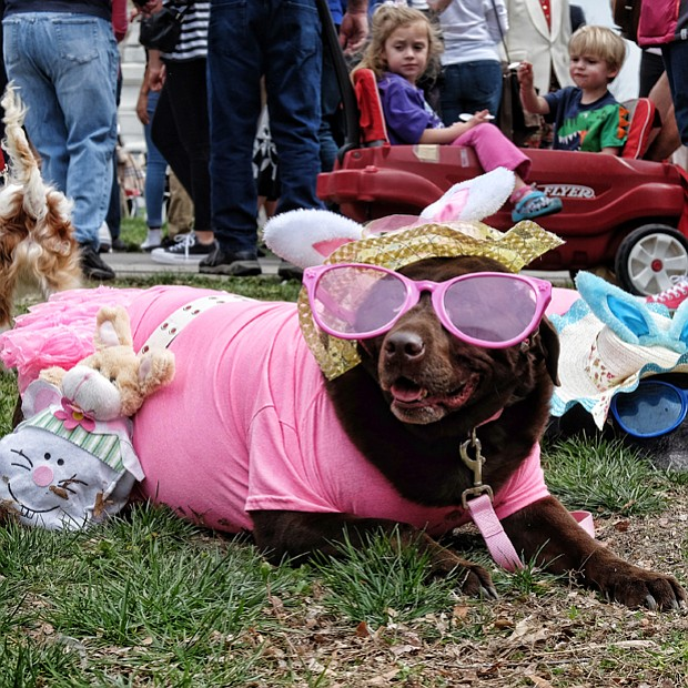 A couple of well-dressed pooches, left, take a break in their Easter bonnets and matching sunglasses and bunny ears. The annual event also features a pet bonnet showcase.