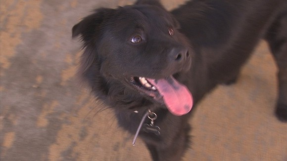 What began as a Sunday afternoon enjoying the dog days of summer at the Becerra house in Mesa changed in ...