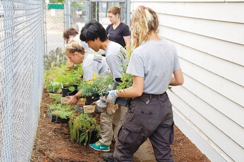 In an effort to preserve affordable housing in gentrified northeast Portland, AmeriCorps crew work on upgrades to the Alberta Commons Apartments, including landscaping, as plants are prepared for transfer to a new garden. The apartments are owned by the non-profit Sabin Community Development Corp.