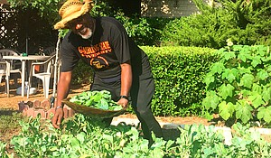 Professor Freedom works in the front yard of his Sankofa Garden Home, picking collard greens. A bushel of okra stands behind him.