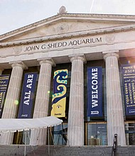 The Shedd Aquarium is offering free admission for Illinois residents now through the end of the month and the Free Day incentive has also been extended to special after-hours events that take place most Mondays, Wednesdays, and Thursdays. Photo Credit: Shedd Aquarium/Brenna Hernandez