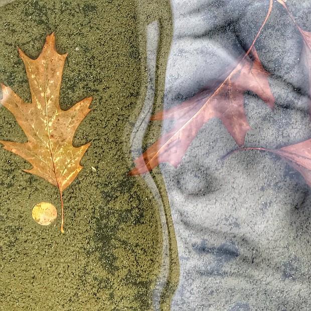 Autumn leaves in Downtown (Sandra Sellars/Richmond Free Press)