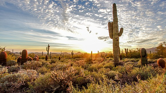 The combination of the Sonoran Desert and Superstition Mountains makes for much magic in Mesa. Arizona's third largest city is ...