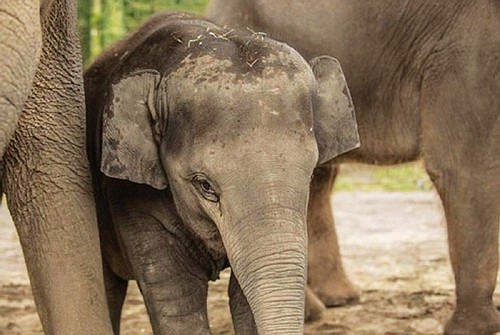 The Oregon Zoo is in mourning following the sudden and unexpected loss of Lily, the youngest of the zoo elephant ...