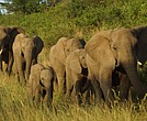 Elephants at Thula Thula Private Game Reserve (Photo courtesy of Thula Thula Private Game Reserve)