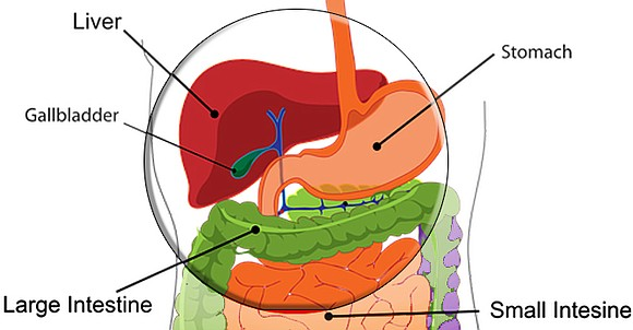 Primary liver cancer is a form of cancer that begins in the liver and is linked with excessive alcohol consumption. ...