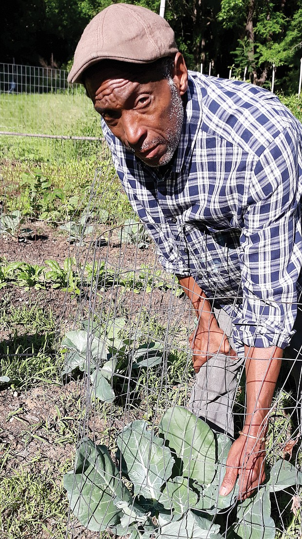 Arthur L. Burton checks the fresh broccoli growing at the Willis Road garden, one of four gardens established by the Community Unity in Action coalition he leads to improve and raise overall prospects of low-income Richmond area residents.