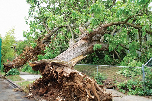 Power was restored and debris began to be cleared for northeast Portland residents Tuesday morning after an extremely rare tornado ...
