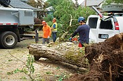 Tree cutting crews clean up the damage after a rare tornado toppled a tree across the back of a parked van in the Vernon-Alberta neighborhood of northeast Portland early Monday night. Several homes were also damaged. But amazingly, no injuries were reported.