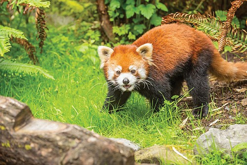 The Oregon Zoo is offering visitors a little something extra this summer: A Twilight Tuesday special event each third Tuesday ...