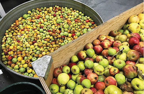 Neighbors invited to turn unwanted backyard apples and fruits into a community cider to feed the hungry