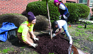 Dozens of trees were recently planted at the Greenwood Park Apartments as one of the final touches on a $12 million renovation project. Photo Credit: Preservation of Affordable Housing