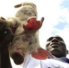 "Kenyans battle lawmakers over ""piggish"" salary hike"