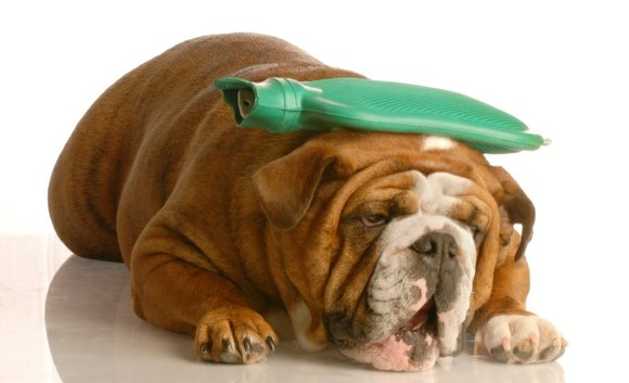 As the dangerous heat returns and the hot days of summer come upon us, doctors from BluePearl Veterinary Partners recommend ...