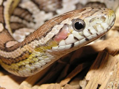 For some animal lovers, watching these exotic creatures slither across the Animal Planet screen isn't enough; you want to bring ...