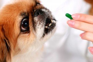 When it comes to the health of your pets, medications play an important role in preventing disease, increasing longevity, and ...